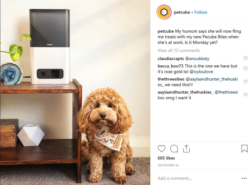 petcube - Social Media Marketing: Three Ideas to Promote Your Brand at Christmas